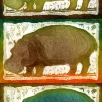 Hippo, etching